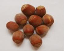 Hybrid big fruit hazelnuts, hazelnut seedlings for sale