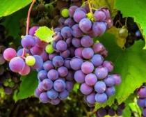 Fresh Fruit Buns